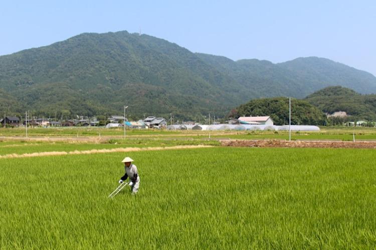新潟県弥彦村は米と神社が魅力!ふるさと納税の気になる返礼品を紹介
