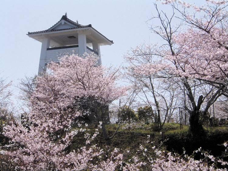 松山城址の桜
