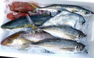 鮮魚ボックス
